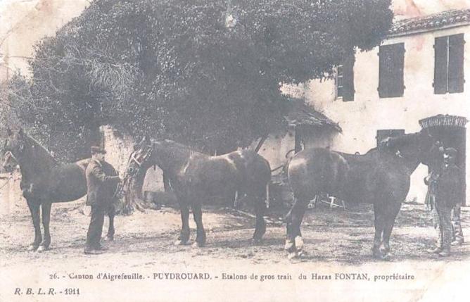 21 Haras Fontan Puydrouard 1911