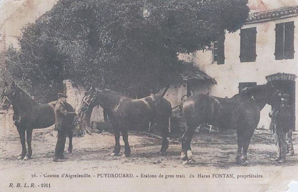 92 haras fontan puydrouard 1911