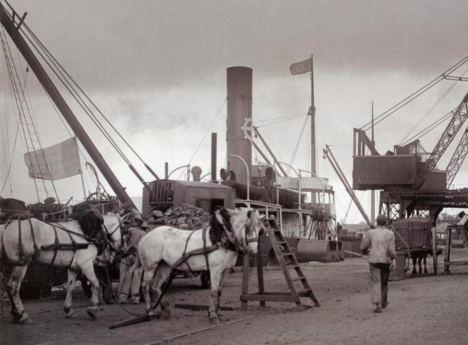 Chevaux charbon la pallice
